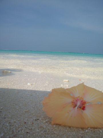 Reves De Voyage Agence De Voyages Rennes Maldives (8) 168